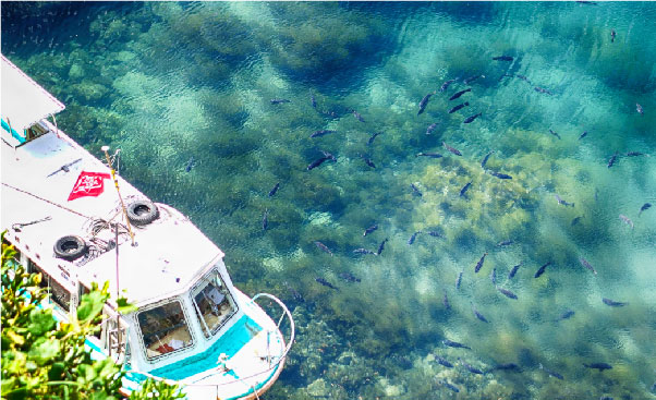 海底透視遊覽船大探險